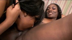 Gorgeous chocolate bitches with thick asses make each other moan