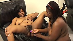Chunky black lesbians use a strap-on dildo to please each other's needy peaches
